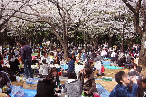 葛飾区 桜のお花見 東京